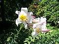 Kew Gardens (38215465566).jpg