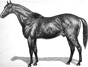 Kingfisher (horse) - Image: Kingfisher (horse)