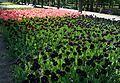 Kirovohrad Arboretum for WLE 2016 01 (YDS 4184).jpg