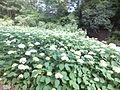 Kobe Municipal Arboretum in 2013-6-22 No,59.JPG