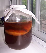 A Kombucha culture fermenting in a jar