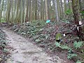 Koya Pilgrimage Routes-Mitanizaka 8.jpg