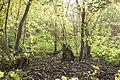 Kurcaparti tanösvény Mindszent - panoramio (53).jpg