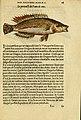 L'histoire naturelle des estranges poissons marins (Page 18) (5998937970).jpg