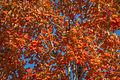 L'automne au Vieux-Port de Montréal (15463335245).jpg