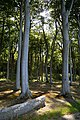 LSG Kühlung - Nienhäger Holz (Gespensterwald) (142).jpg