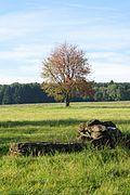 LSG Westerwaelder Seenplatte Steinen.jpg (02).jpg