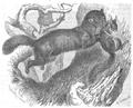 La vita degli animali descrizione generale del regno animale di A. E. Brehm Mammiferi (1872) Martes zibellina.png