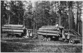 Ladd photo of solid-tired Moreland logging trucks of Biles Coleman Lumber Co. on the Moses Mountain logging unit.... - NARA - 298699.tif