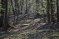 Lainzer Tiergarten März 2014 Wald am Schlossergassl 1.jpg