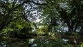 Lake behind the bush.jpg