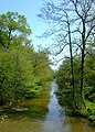 Lake in Woodlands, Calke - geograph.org.uk - 797545.jpg