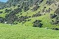 Landscape in Southland 01.jpg