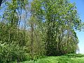 Landschaftsschutzgebiet Gestorfer Lößhügel (2).JPG