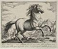 Landschap met paard uit Campania. NL-HlmNHA 1477 53011497.JPG
