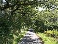 Lane near Lewer - geograph.org.uk - 536381.jpg