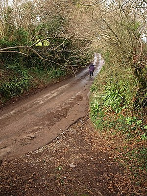 English: Lane to Luscombe Cross A long and rat...