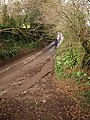 Lane to Luscombe Cross - geograph.org.uk - 1134936.jpg