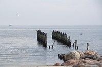 Lapmežciema sedums jūra.jpg