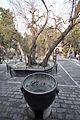 Lascar Imperial Garden - Forbidden City (4498199246).jpg