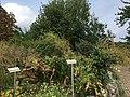 Lassan-Papendorf Duft- und Tastgarten (3).jpg