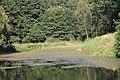 Lasy łączańskie - panoramio (2).jpg