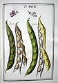 LeBerryais Haricots planche 27.jpg