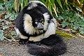 Lemur (26618923907).jpg