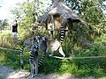 Lemur dk - panoramio.jpg
