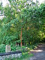 Lindenweg Eppelheimer Wald.JPG