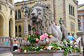 Lion IMG 9026.jpg