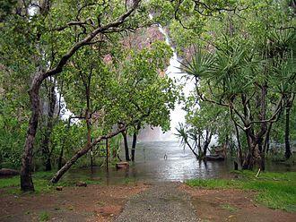 Litchfield National Park - Natural forest