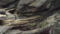 Little penguins 2 (38929425774).png