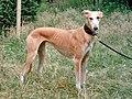 Longdog Abgarden (cropped).jpg