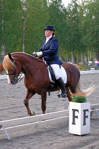 Finnhorse - Finnhorse stallion competing in dressage