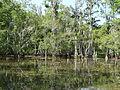Louisiana Swamp (8728799967).jpg