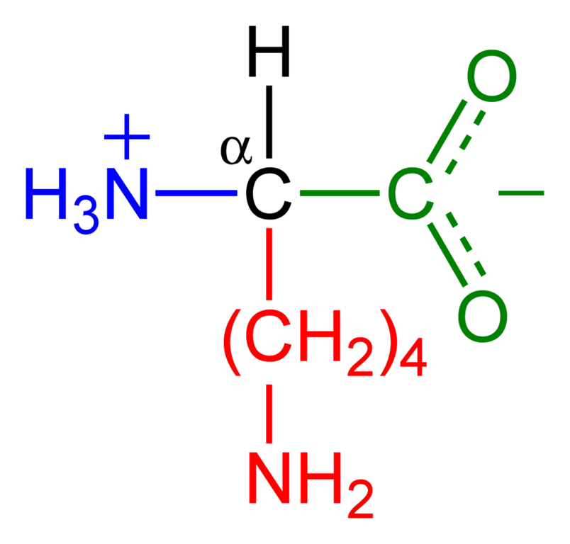 File:Lysine-zwitterion-2D.png - Wikimedia Commons