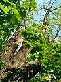 MD.DN.Rediul Mare - park of Rediul Mare - apr 2018 - 71.jpg