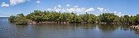 Mangrove, Petit-Canal, Grande-Terre, Guadeloupe, 2010-03-28-.jpg