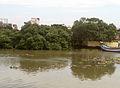 Mangrove swamp at Kakinada 02.jpg