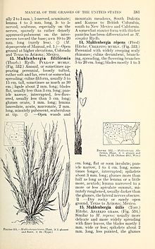 Manual of the grasses of the United States (Page 381) BHL42021020.jpg