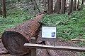 Marin County, CA, USA - panoramio (59).jpg