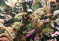 Marine aquarium.jpg