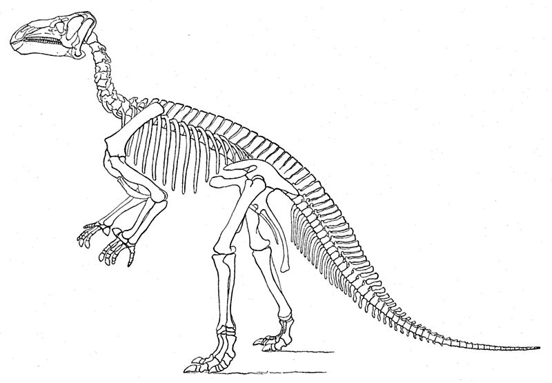 File:Marsh Iguanodon.jpg