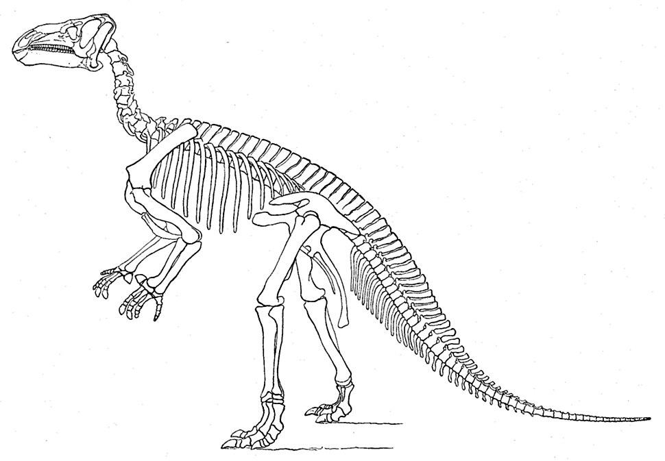 Marsh Iguanodon