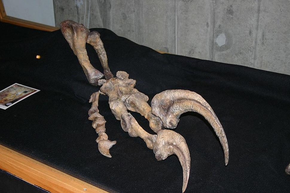 Megaraptor hand