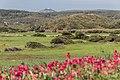 Menorca 2014-041 (16256028215).jpg