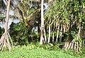 Merir AKK Strand Vegetation.jpg