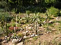 Mexican garden - Мексиканский сад - panoramio.jpg