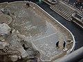 Monete nella fontana di Trevi - Foto Giovanni Dall'Orto.jpg